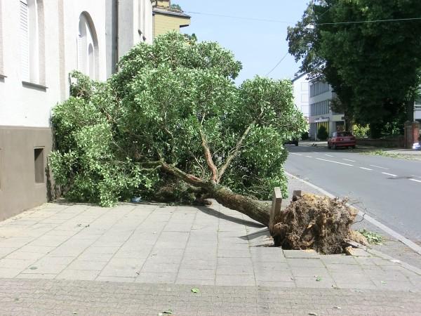 Sturm - Orkan - Schäden